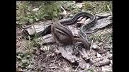 Змия И Катерица
