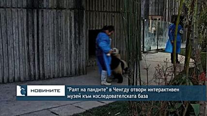 """""""Раят на пандите"""" в Ченгду отвори интерактивен музей към изследователската база"""