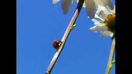 Minuscule - Ladybug love story