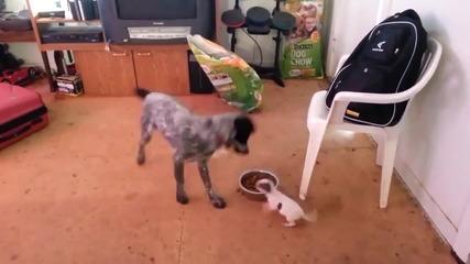 Кучета в борба за храна