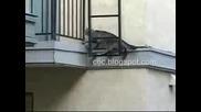 Какво Е Това Котка Или Спайдър Мен?