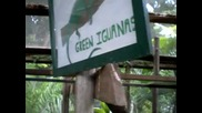 Игуана , интересно е да знаем *превод*
