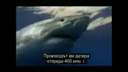 National Geographic - Ultimate Shark part 1