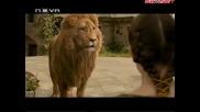 Хрониките на Нарния Принц Каспиян (2008) Бг Аудио ( Високо Качество ) Част 8 Филм