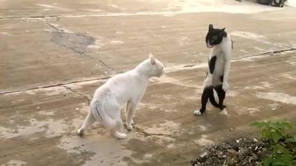 Котка С Поза Като На Кобра! (смях)