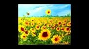Слънчоглед (детска Забавна Приказка)