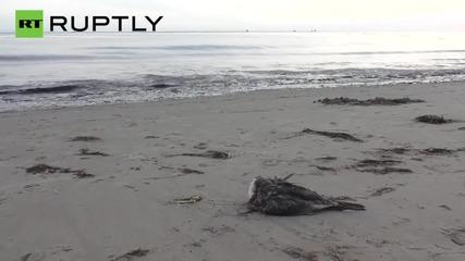 21,000 Gallons of Crude Leak onto Refugio Beach Causing 4 Mile Long Oil Slick