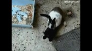 Опа котето беше изнасилено xd Супер луди котки !