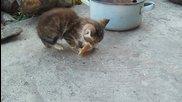 Малко коте (на 2 месеца), а как ръмжи само!