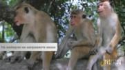 На маймуни ни направиха