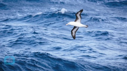Scientists and Seals Investigate the Mysterious Southern Ocean