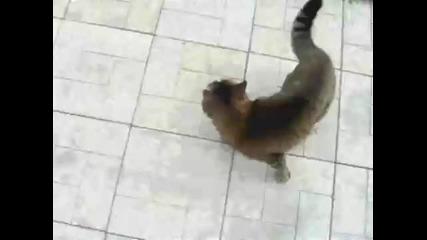 Котка гони немска - овчарка