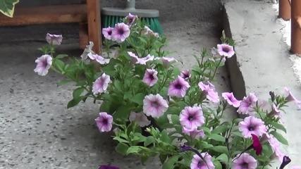 Цветя - пролет 2014г