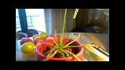 Carnivorous Cape Sundew Plant Timelapse