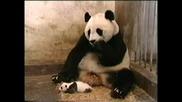 Панда Киха - Супер Невероятно Яко И Смешно!