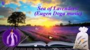 Море от лавандула! ... ( Eugen Doga music) ...