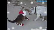 Котка Обута В Коледни Чорапи + Една Тупаница!!