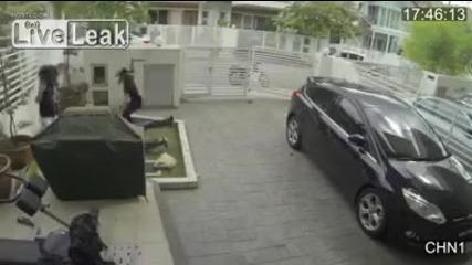 Мацка не се дава на крадец
