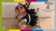 Животните също празнуват Хелоуин