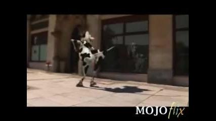 мнооооого яка - крава ще ви разбие