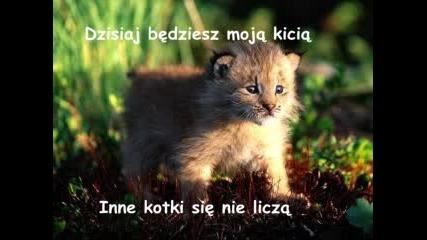 Verba - Kicia
