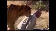 Сибирски Тигър Убива Човек (симулация)