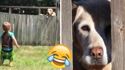 Приятелство без бариери (буквално): Куче и дете играят с топка през ограда