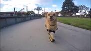 Малко куче се радва, че бяга отново с новите си протези.