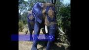 Twins I Era Ojandanic - Plavi Slon
