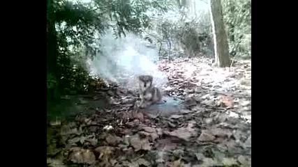 Вълк се топли на пара