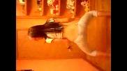 Girl Dancing Perreo #5 (hot!).flv