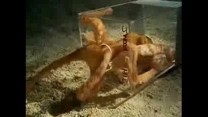 Октопод Минава През Малка Дупка