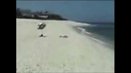 разбойник на плажа