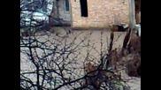 Лозово - 28.12.2009 - Наводнението