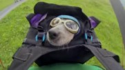 Dean Potter -worlds First Wingsuit Base Jumping Dog