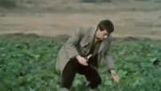 Преброяване на дивите зайци, 1973 г. (откъс)