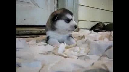 Малко кученце говори