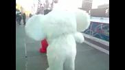 Две Чебурашки (митично руско животно) се бият