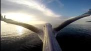 Пеликан лети с камера на човката