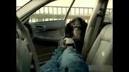 ( Смях ) Маймуна против крадци !?