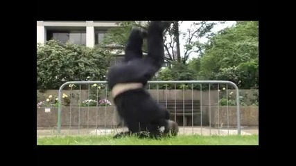 Learn Freerunning and Parkour - Diving Roll