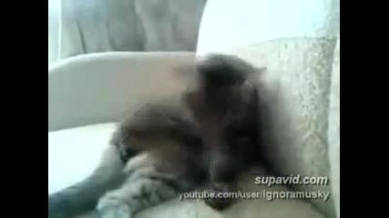 Котка Мазохист [смях]