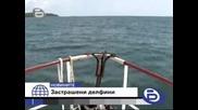 Ужасяващо все почече делфини умират по нашето море