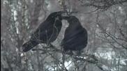 Elderwind - В снегах (in the Snow)