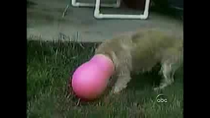 Смешно, Глупаво Куче