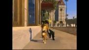 Котката От Shrek