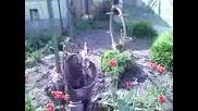 моита цветна градинка