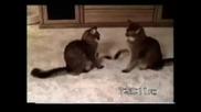 Най - шашавите котки , които сте виждали някога !