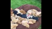 Одеяло от кученца !
