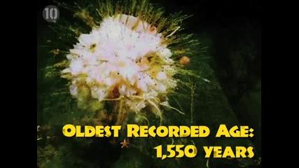 Топ 10 най - дълго живеещи същества